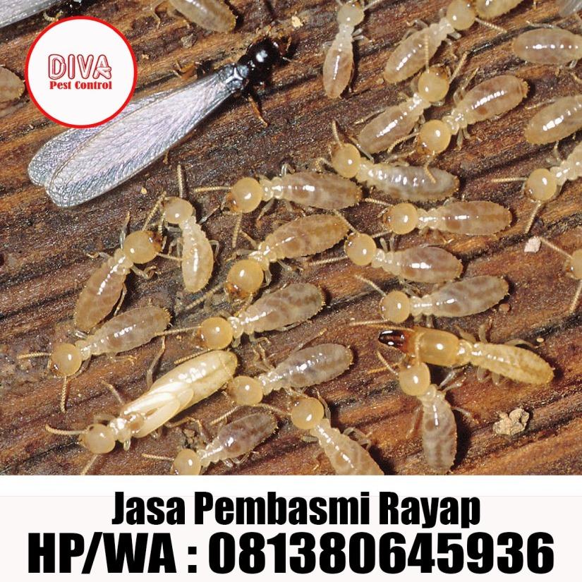 Jasa Pembasmi Kecoa di Mobil Jakarta timur – DIVA PEST CONTROL 4aa30e982e